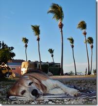 Our old beagle Oscar
