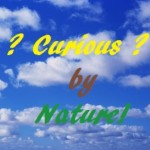 Profile photo of Curious by Nature