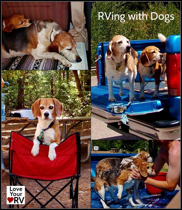 rv-dogs