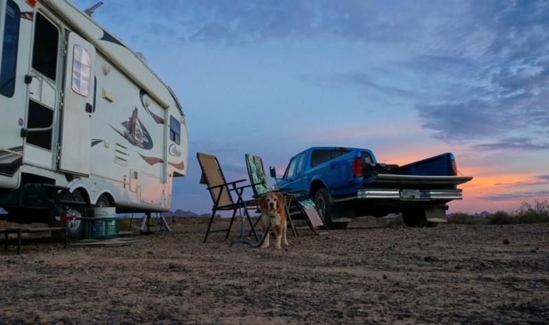 dirty-desert-dwelling-beagle