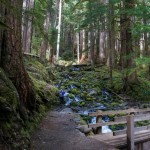 sol-duc-falls-trail-olympic-national-park-15