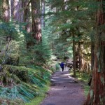 sol-duc-falls-trail-olympic-national-park-3