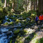 sol-duc-falls-trail-olympic-national-park-6