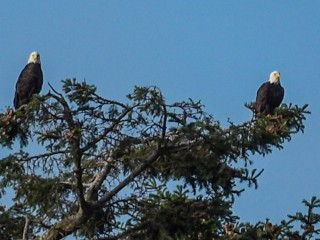 Eagle Audience