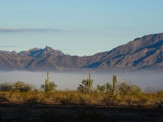 Fog bank in the desert