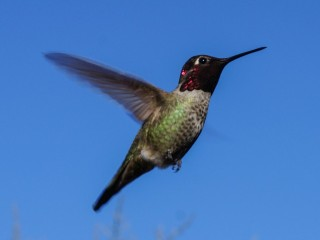 Hummers 2