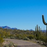 Organ Pipe Cactus National Monument - Twin Peaks Campground (3)