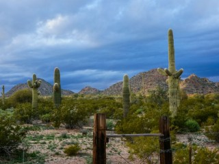 Pictures from the Arizona Sonoran Desert (3)