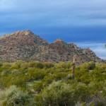 pictures-from-the-arizona-sonoran-desert-4