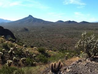 Sonoran Desert (1)
