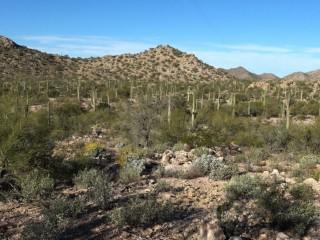 Sonoran Desert (8)